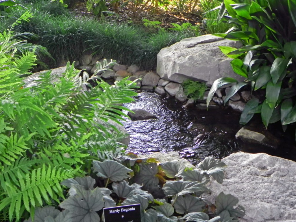 Garden Stroll 2